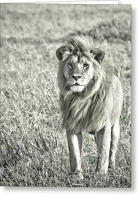 Accepting Greeting Cards - The King Stands Tall Greeting Card by Darcy Michaelchuk