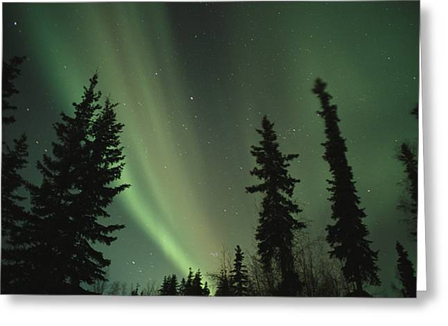 The North Photographs Greeting Cards - The northern lights Greeting Card by Maria Stenzel