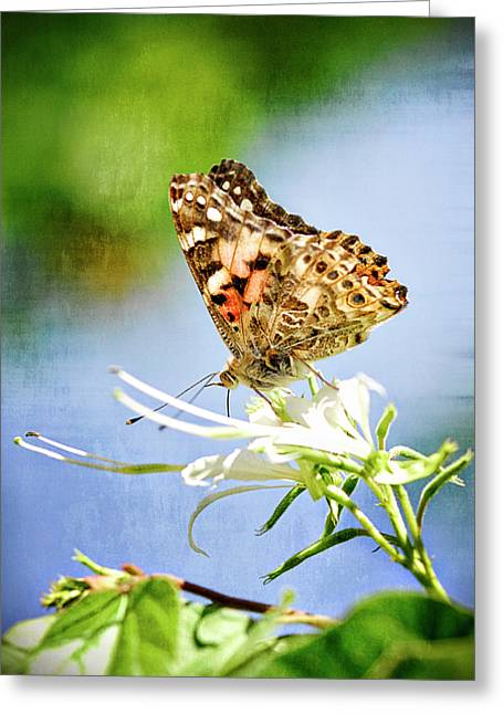 The Painted Lady  Greeting Card by Saija  Lehtonen