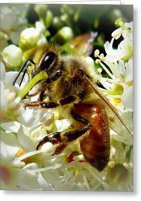 Up Close And Personal Honey Bee Greeting Card by Cindy Wright