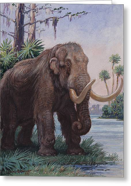 Animals In Art Greeting Cards - When The Age Of Man Began, The Mastodon Greeting Card by Charles R. Knight