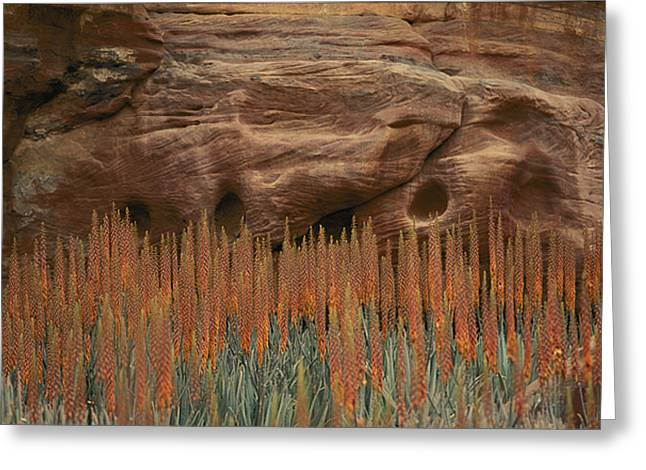 Jordan Photographs Greeting Cards - Wildflowers In The Desert Land Of Petra Greeting Card by Annie Griffiths
