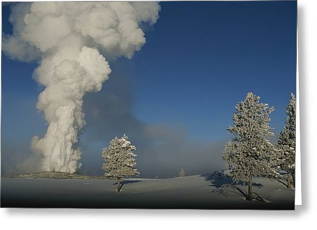 Old Faithful Geyser Greeting Cards - Winter View Of Old Faithful Geyser Greeting Card by Norbert Rosing
