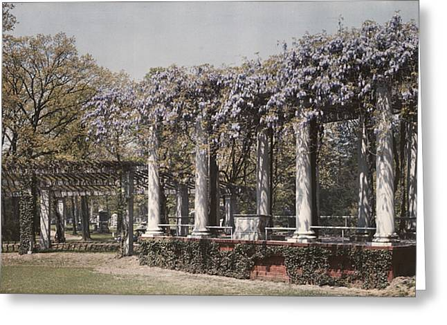 Wistaria On Old Amphitheater Greeting Card by Charles Martin