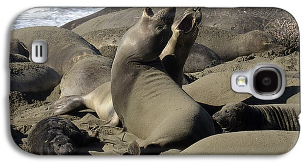 Elephant Seals Galaxy S4 Cases - Seal Duet Galaxy S4 Case by Bob Christopher