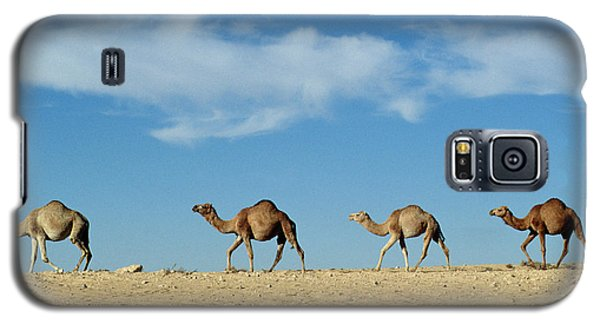Camel Train Galaxy S5 Case by Anonymous