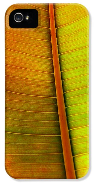 Ecology iPhone 5 Cases - Leaf Pattern iPhone 5 Case by Carlos Caetano