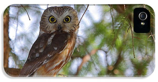 Northern Owl iPhone 5 Cases - Saw-whet Owl iPhone 5 Case by Bruce J Robinson