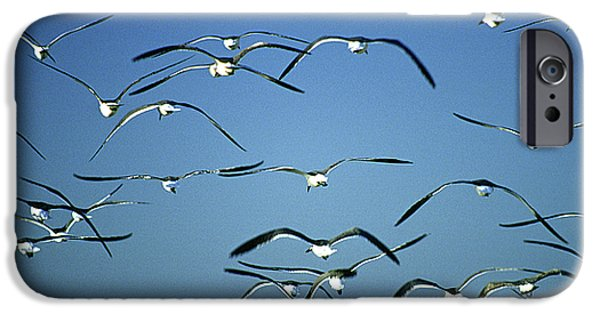 Seagull iPhone Cases - Seagulls iPhone Case by Michael Mogensen
