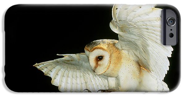 High Speed Photography iPhone Cases - Barn Owl iPhone Case by Andy Harmer and SPL and Photo Researchers