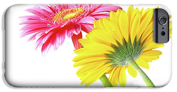 Formal iPhone Cases - Gerbera Flowers iPhone Case by Carlos Caetano