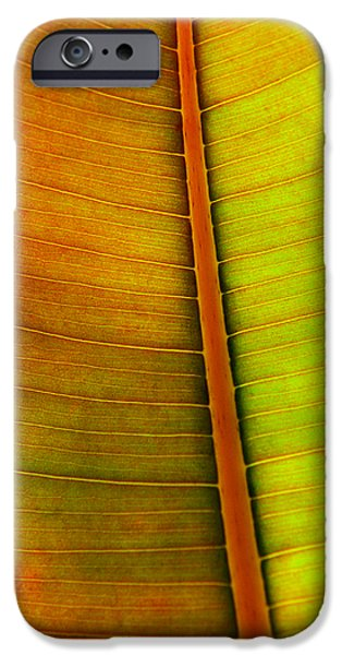 Nature Abstract iPhone Cases - Leaf Pattern iPhone Case by Carlos Caetano