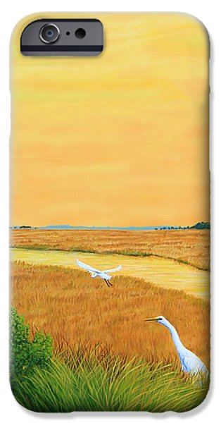 Glynn iPhone Cases - Marshes of Glynn iPhone Case by Jim Ziemer