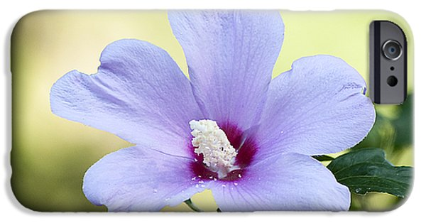 Althea iPhone Cases - Purple Althea iPhone Case by Kenneth Albin
