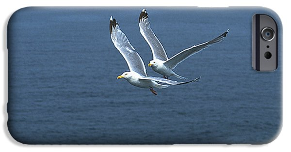 Flying Seagull iPhone Cases - The Aviators iPhone Case by Michael Mogensen