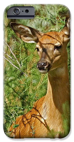 Nature Center iPhone Cases - Whitetail Doe Painterly iPhone Case by Ernie Echols