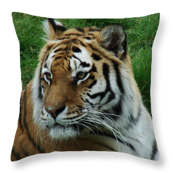 Tiger Throw Pillow by Nicola Butt
