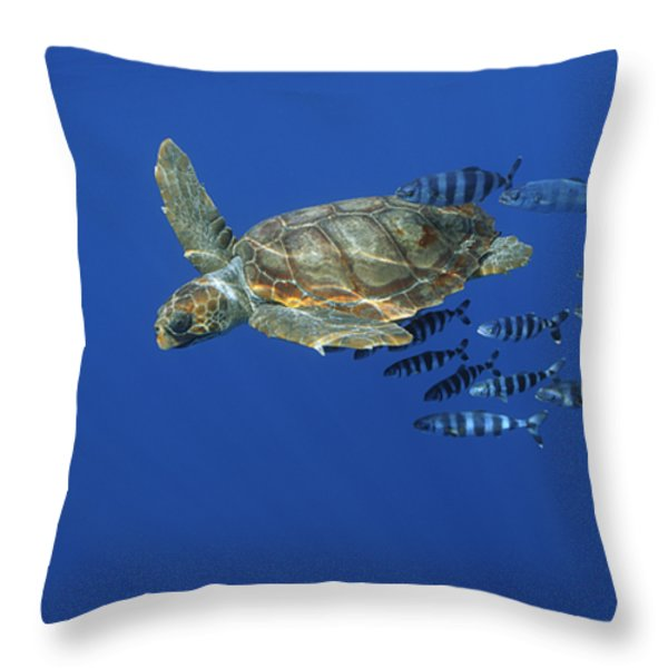 Trailed By Pilotfish, A Young Throw Pillow by