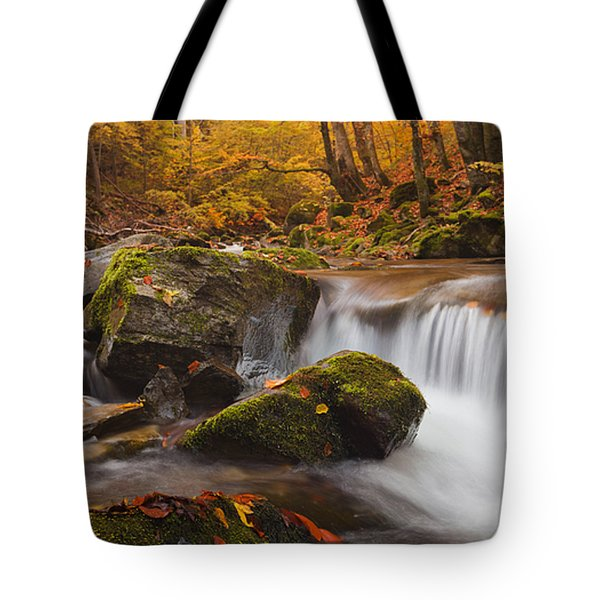 Autumn Forest Tote Bag by Evgeni Dinev