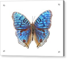 Brush-footed Butterfly Of Madagascar Acrylic Print by MajchrzakMorel