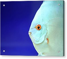 Fish Acrylic Print by Photography T.N.T