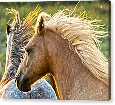 Free Spirits Acrylic Print by Ron  McGinnis