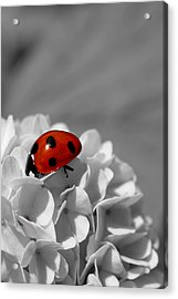 Lady Bug Sc Acrylic Print by Martina Fagan