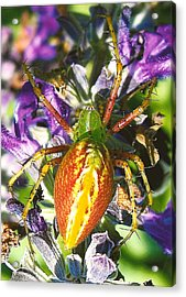Scary Spider Acrylic Print by Janet Pugh