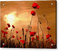 Sunset Poppies Acrylic Print by James Shepherd