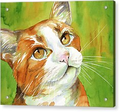 Tan And White Domestic Cat Acrylic Print by Cherilynn Wood