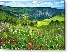 Wild Flowers Blooming On Mount Rainier Acrylic Print by Feng Wei Photography