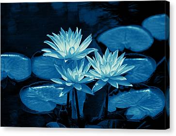 Three Water Lilies In Cyan Canvas Print by Linda Phelps
