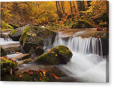 Autumn Forest Canvas Print by Evgeni Dinev