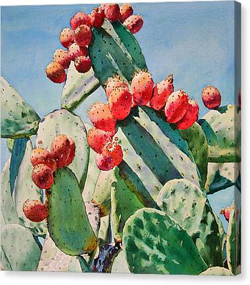 Cactus Apples Canvas Print by Kathleen Ballard