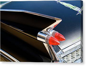 Caddy Fin Canvas Print by Terry Thomas