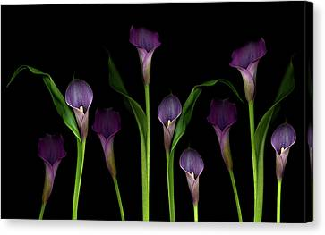 Calla Lilies Canvas Print by Marlene Ford