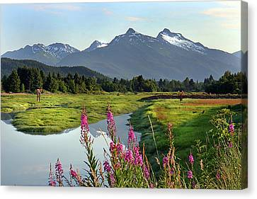 Fireweed Near River. Canvas Print by Dagny Willis