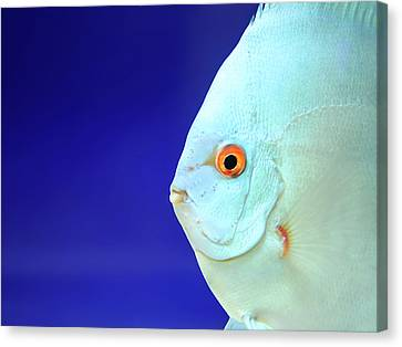 Fish Canvas Print by Photography T.N.T