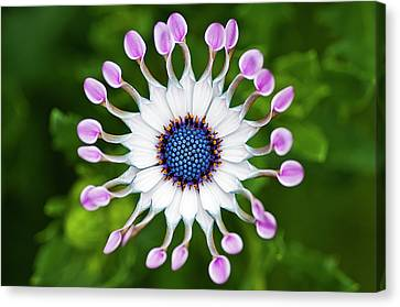 Flower Canvas Print by Simon Anderson