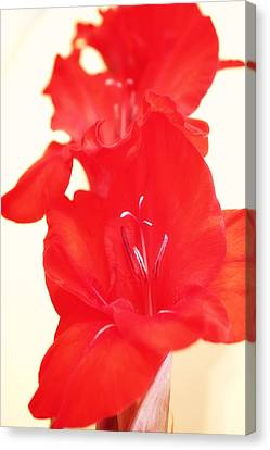Gladiola Stem Canvas Print by Cathie Tyler