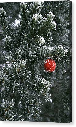 Holiday Ornament Hanging On Snow Dusted Canvas Print by Kate Thompson
