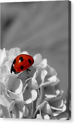 Lady Bug Sc Canvas Print by Martina Fagan