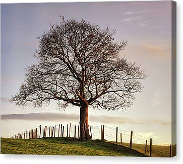 Large Tree Canvas Print by Jon Baxter