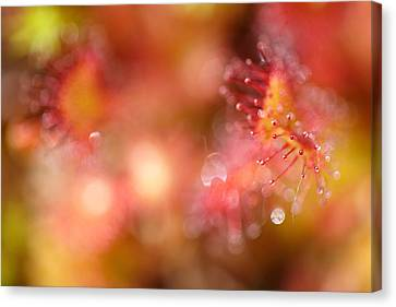 Natural Jewelery Canvas Print by Roeselien Raimond