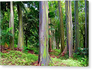Rainbow Eucalyptus Canvas Print by Monica and Michael Sweet
