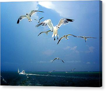 Seagulls  Canvas Print by Brittany H