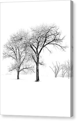 Snow Trees II Canvas Print by Glennis Siverson