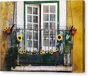 Sunflower Balcony Canvas Print by Carlos Caetano