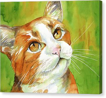 Tan And White Domestic Cat Canvas Print by Cherilynn Wood