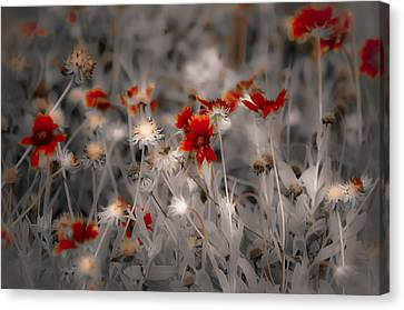 Wildflowers Of The Dunes Canvas Print by DigiArt Diaries by Vicky B Fuller